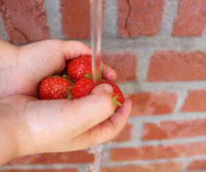 aardbeien-wassern